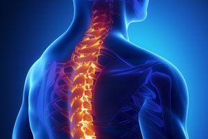 stem cells from teeth to repair spinal injuries