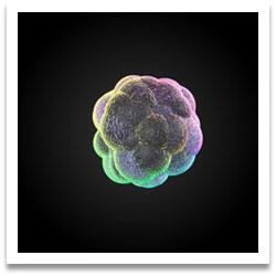stem cells grow better in 3-D