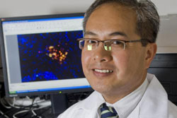 Borlongan - Stem Cell Researcher