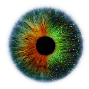 Eye grown in lab using stem cells
